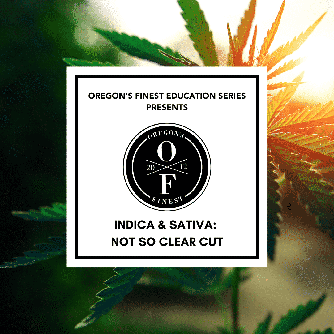 "header image for blog post - cannabis leaf in the sun, oregon's finest logo and the text ""indica & sativa: not so clear cut"""