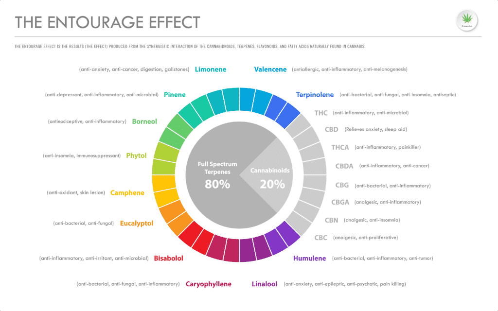 a chart showing a visual of the entourage effect in cannabis via terpenes and cannabinoids