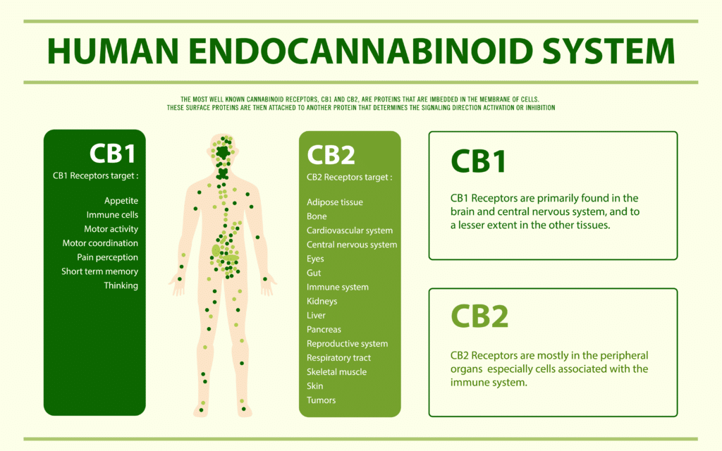 cannabinoid receptors chart